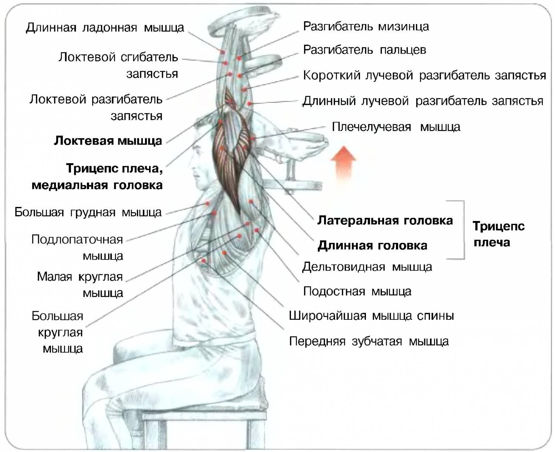 Упражнения на трицепс в домашних условиях