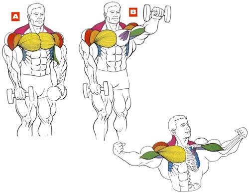 протеиновое питание для похудения вред