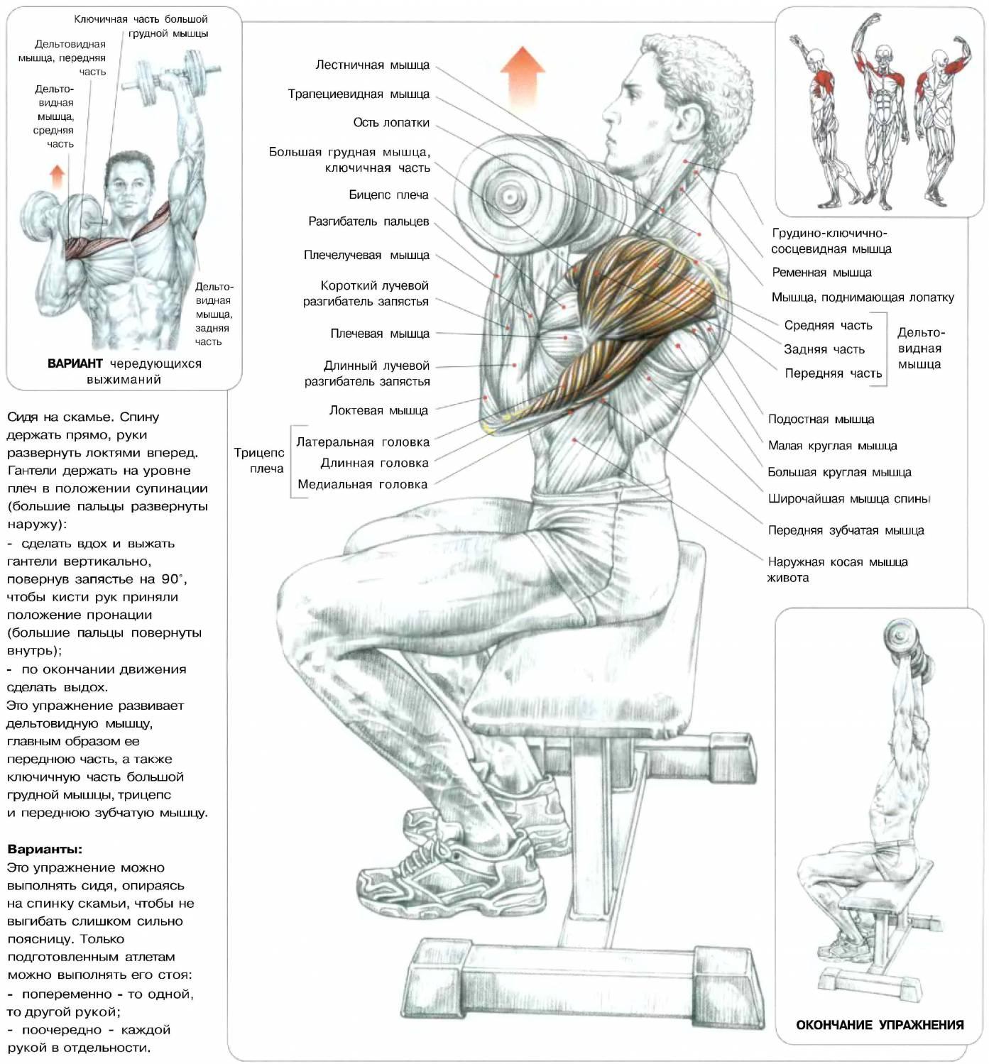 Фото как накачать грудную мышцу в домашних условиях